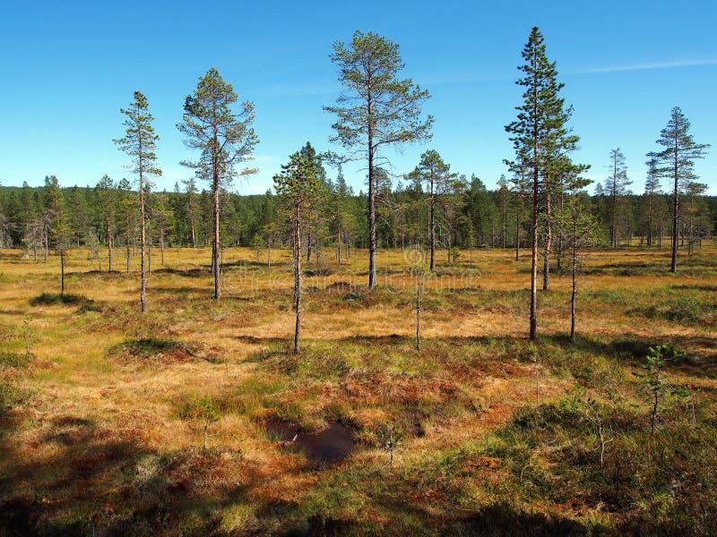 Norra Mora Vildmark Natural Reserve foto de archivo libre de regalías