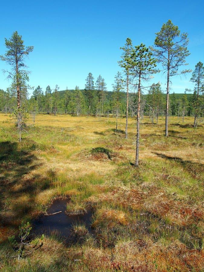 Norra Mora Vildmark Natural Reserve immagine stock