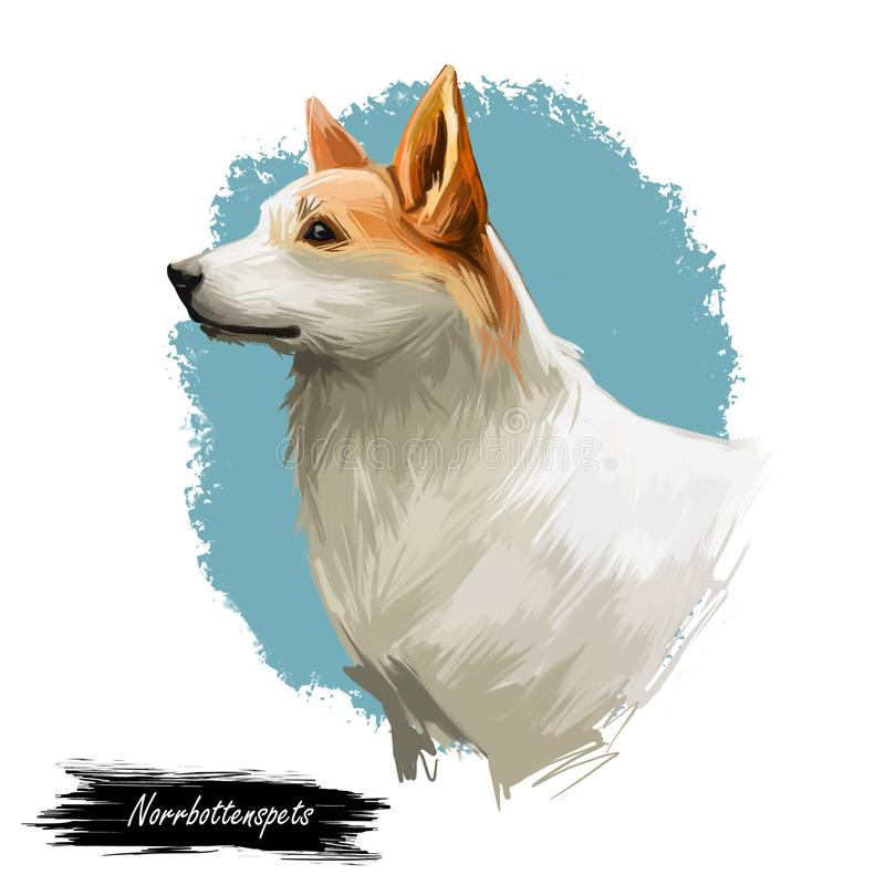 Norrbottenspets与长的耳朵的狗纯血统的动物,数字式艺术被隔绝 波美丝毛狗类型哺乳动物的家畜画象  向量例证