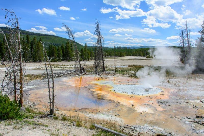Norris Geyser Basin, het Nationale Park van Yellowstone, Wyoming, de V.S. stock afbeeldingen