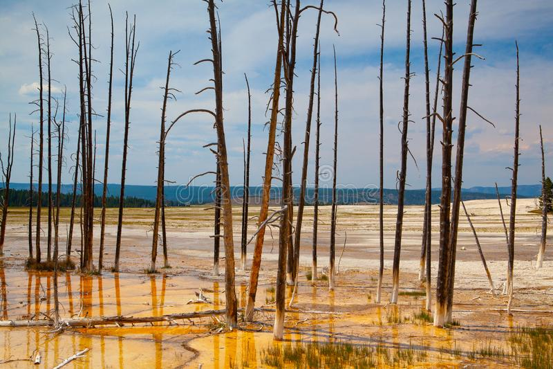 Norris Geyser Basin in Yellowstone National Park, Wyoming, USA. It is the the hottest geyser basin in Yellowstone royalty free stock photography