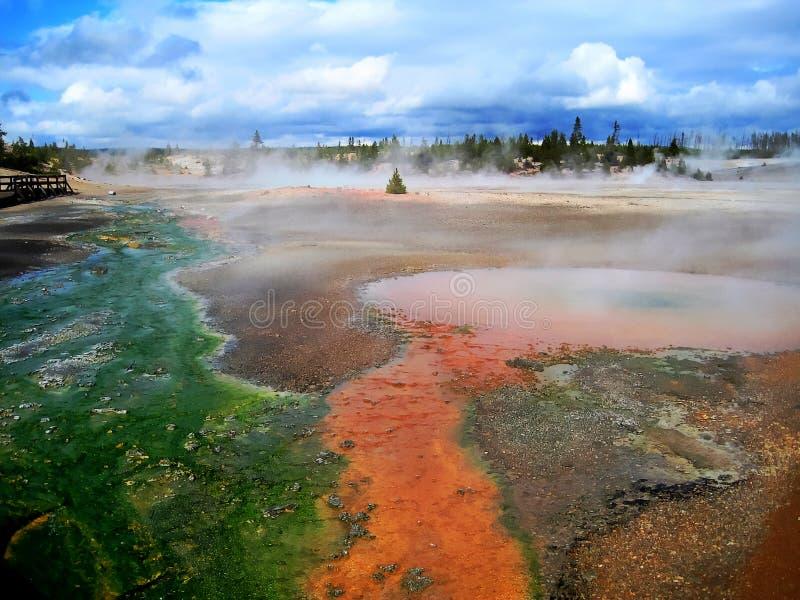 Norris Geyser Basin in Yellowstone (Wyoming, de V.S.) royalty-vrije stock foto