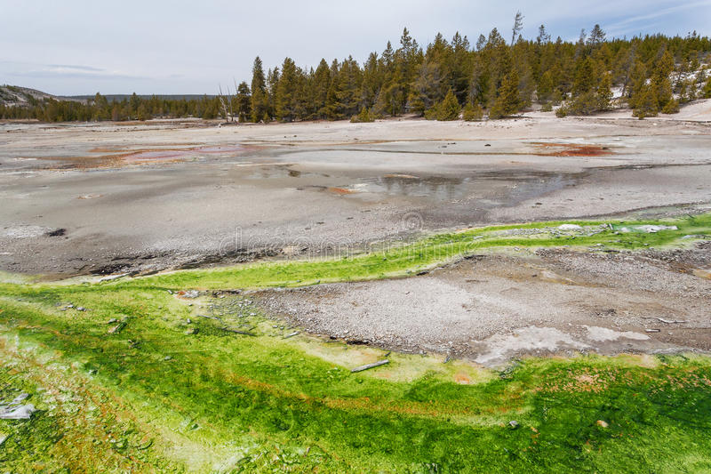 Norris Geyser Basin Yellowstone, Wyoming, de V.S. royalty-vrije stock foto's