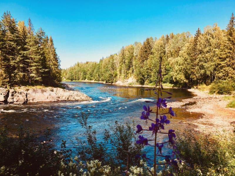 norsk flod royaltyfri bild