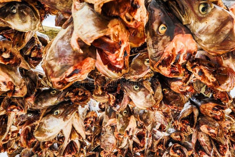 Norsk torsk för traditionell utomhus- uttorkning som bakgrund royaltyfri fotografi