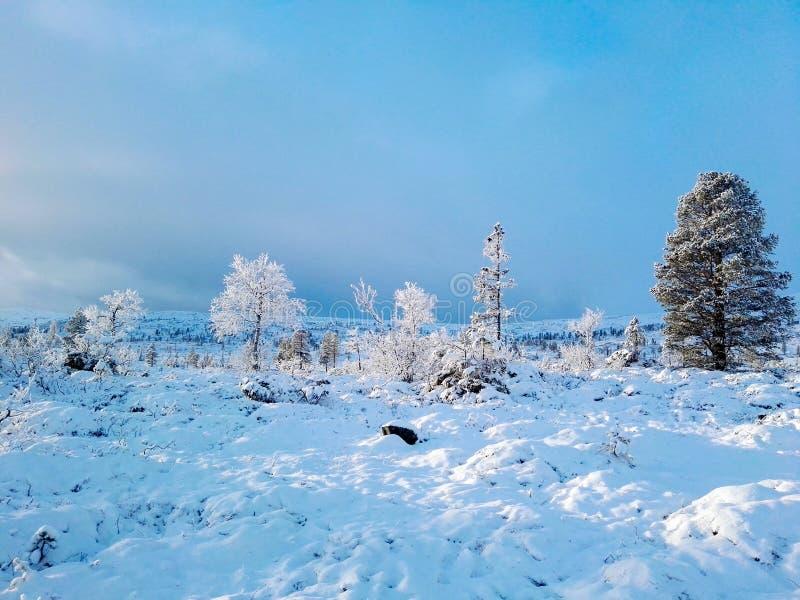 Norsk vinter II arkivfoto
