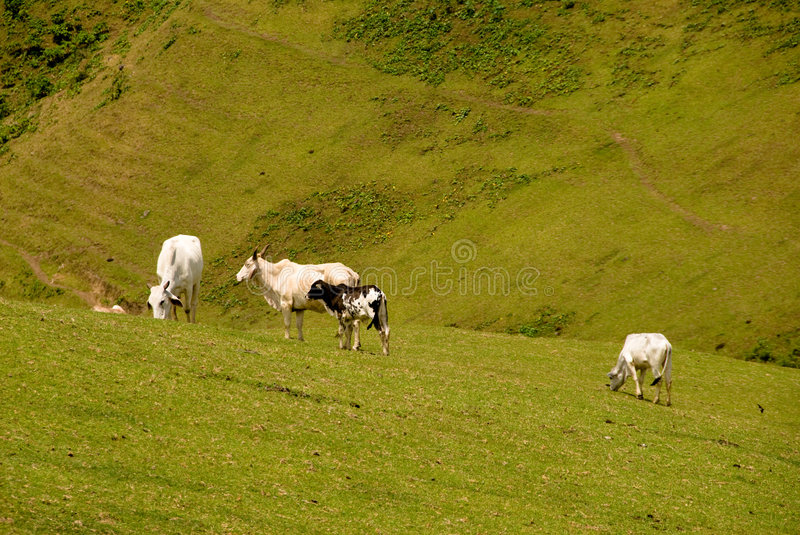 Download Nortern Island stock photo. Image of land, batanes, hills - 6010766