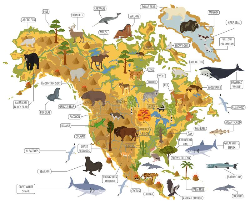 North America flora and fauna map, flat elements. Animals, birds. And sea life big set. Build your geography infographics collection. Vector illustration vector illustration