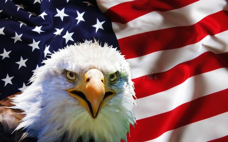 North American Bald Eagle on American flag.  stock photo