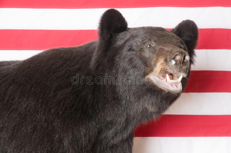 Download North American Black Bear stock photo. Image of stars - 18928664