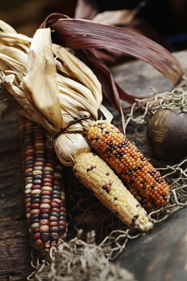 Side-by-side colored corn. It is a North American grain plant that produces large grains or seeds placed in rows on a cocoon. Many types are very valuable for stock images