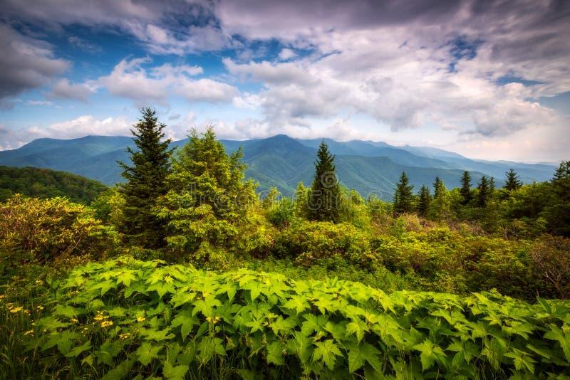 North Carolina Appalachian Mountains Mount Mitchell Scenic Landscape Photography stock photography