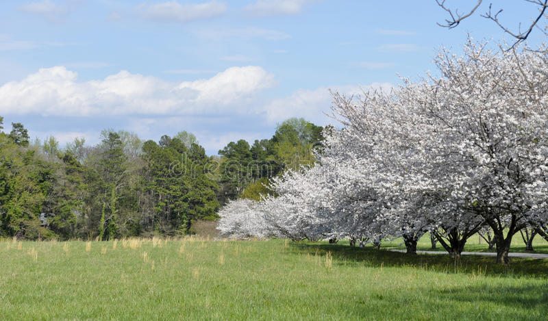 North Carolina Meadow With Cherry Trees Stock Photography