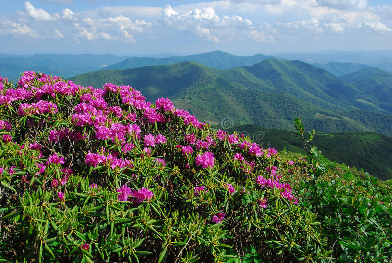 North Carolina Mountains and Wildflowers stock photo