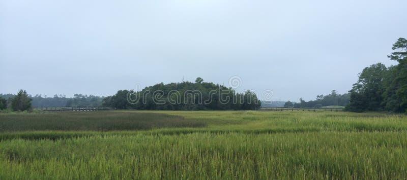North Carolina Salt Marsh royalty free stock image