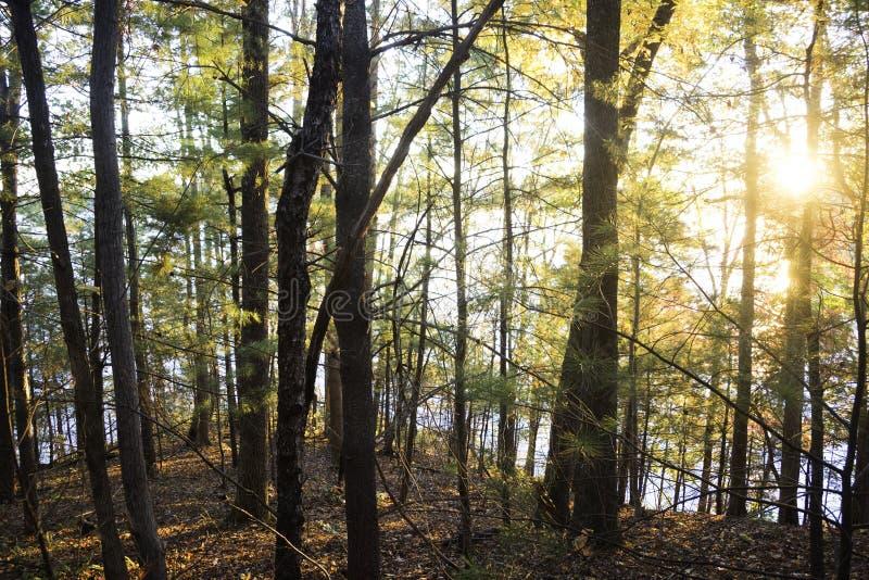 North Carolina am See James State Park stockfotografie