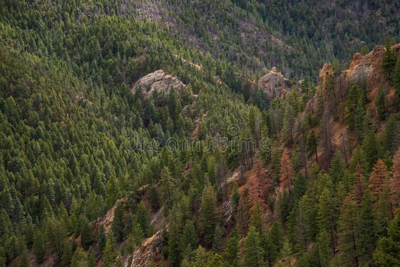 North cheyenne canyon canon colorado springs. Mountain landscape forest views of vacation travel stock images