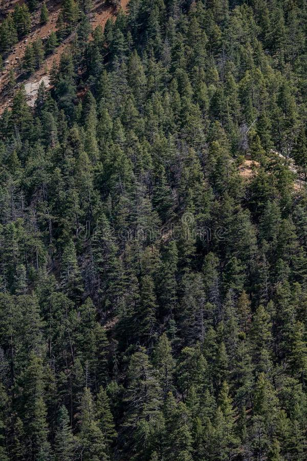 North cheyenne canyon canon colorado springs. Mountain landscape forest views of vacation travel royalty free stock images