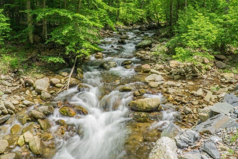 North Creek - Wild Mountain Trout Stream - 5. North Creek is a popular wild mountain trout stream located in Botetourt County, Virginia, USA royalty free stock photos