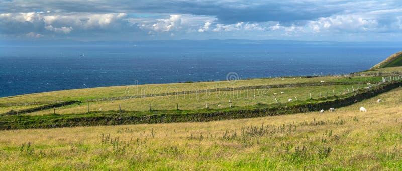 North Devon coast. Pastures by the sea. Long fence separates farmland. National park Exmoor. UK stock photo