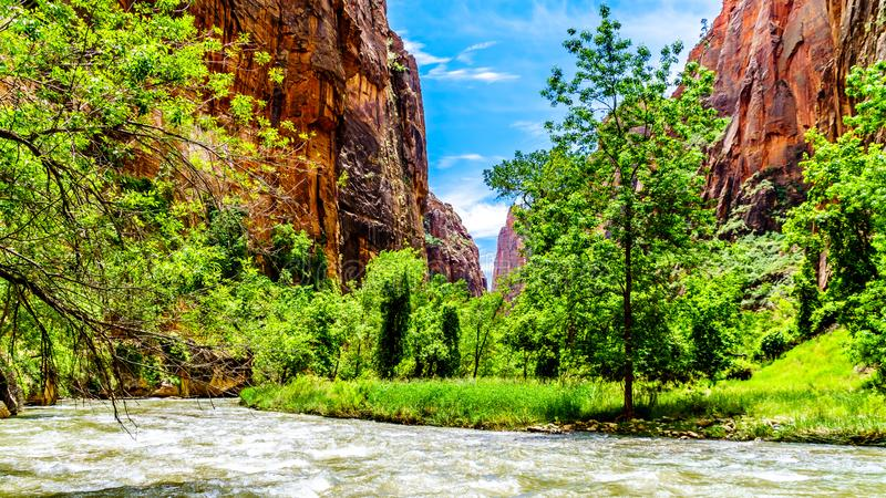 The Virgin River as it carved its way through the Sandstone Mountains of Zion National Park, UT, USA. The North Fork of the Virgin River as it flows through royalty free stock images