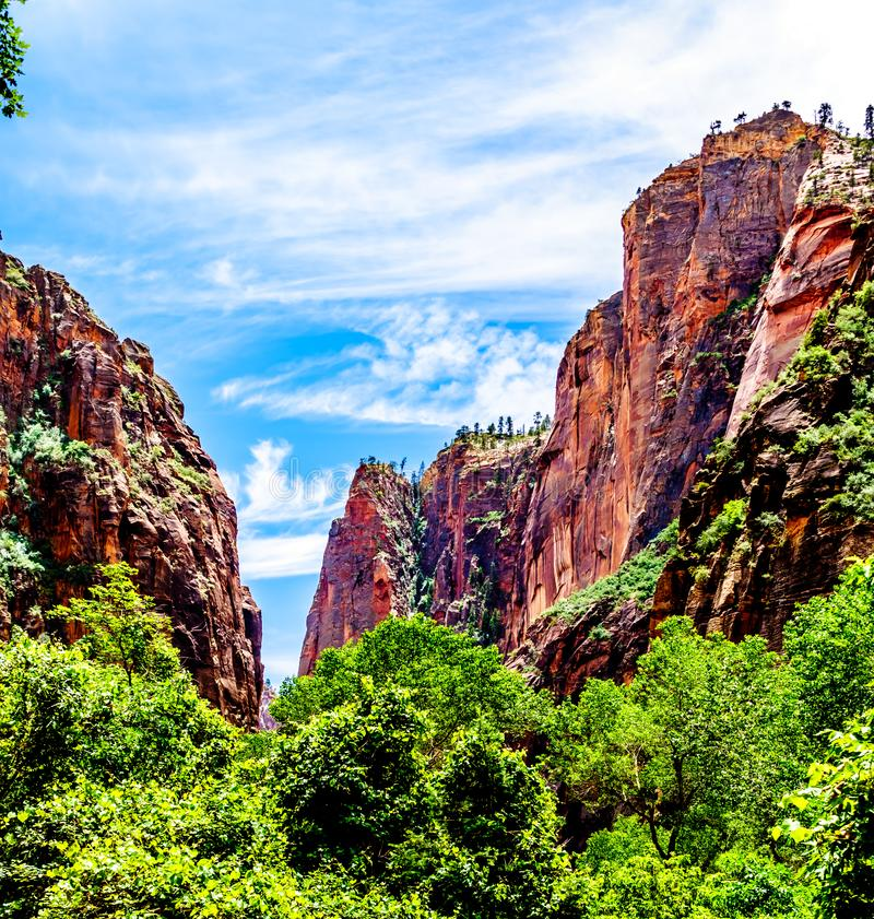 The Virgin River as it carved its way through the Sandstone Mountains of Zion National Park, UT, USA. The North Fork of the Virgin River as it flows through royalty free stock photos