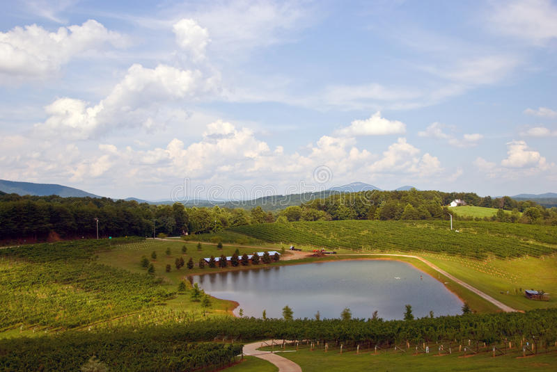 Download North Georgia Vineyard stock image. Image of rows, country - 10852759