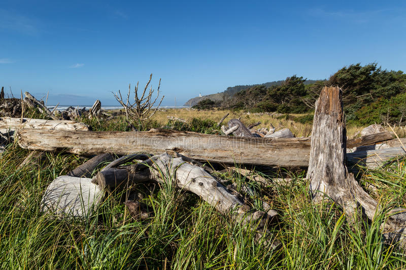 North Head lighthouse. Driftwood and beachgrass frame distant view of North Head lighthouse under blue sky at Cape Disappointment, WA, USA stock image