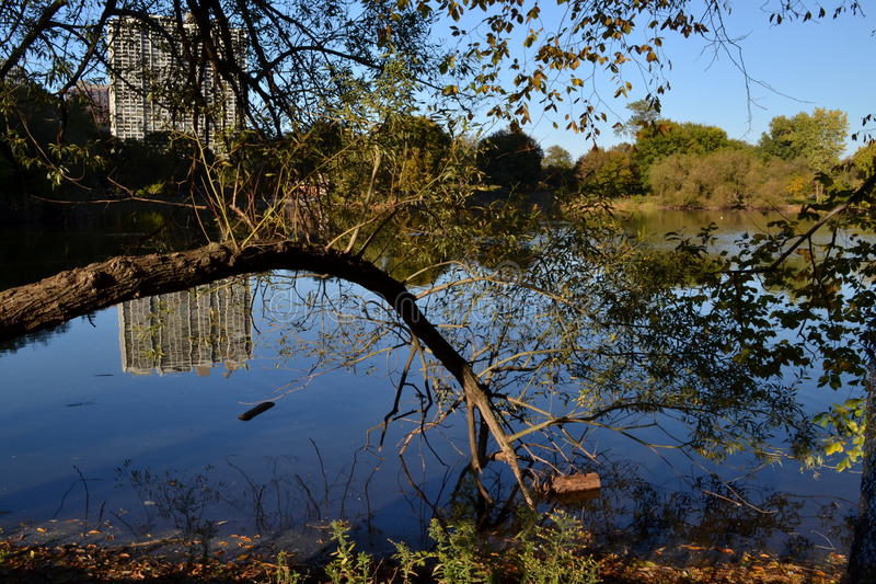 North Pond royalty free stock photography