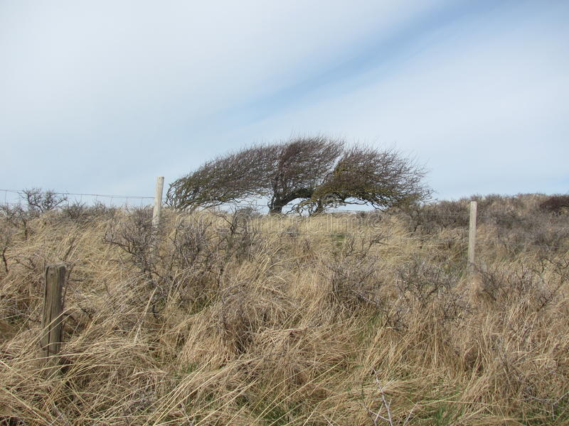 Tree by the north sea stock photos