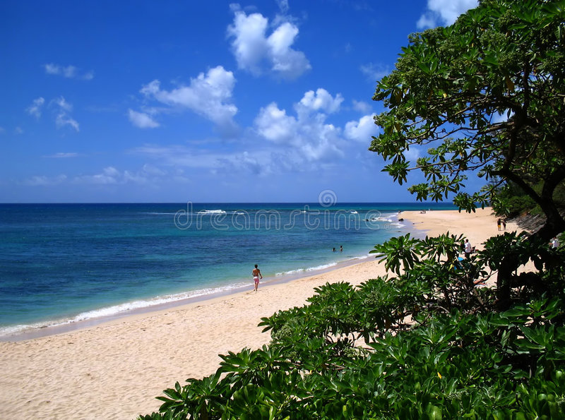 North Shore Stroll. Winding view of a North Shore, Hawaii beach with native foliage in the foreground royalty free stock photo
