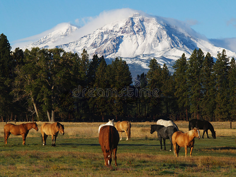 North Sister Mountain royalty free stock photo