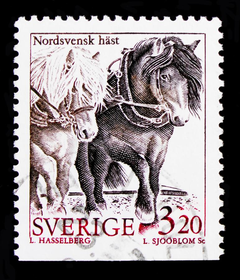North Swedish Horse Equus ferus caballus, Domestic animals serie, circa 1994 stock photos