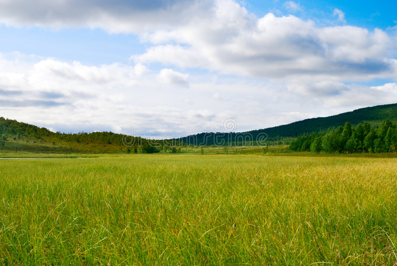 North tundra. Tundra in north Russian montain royalty free stock photo