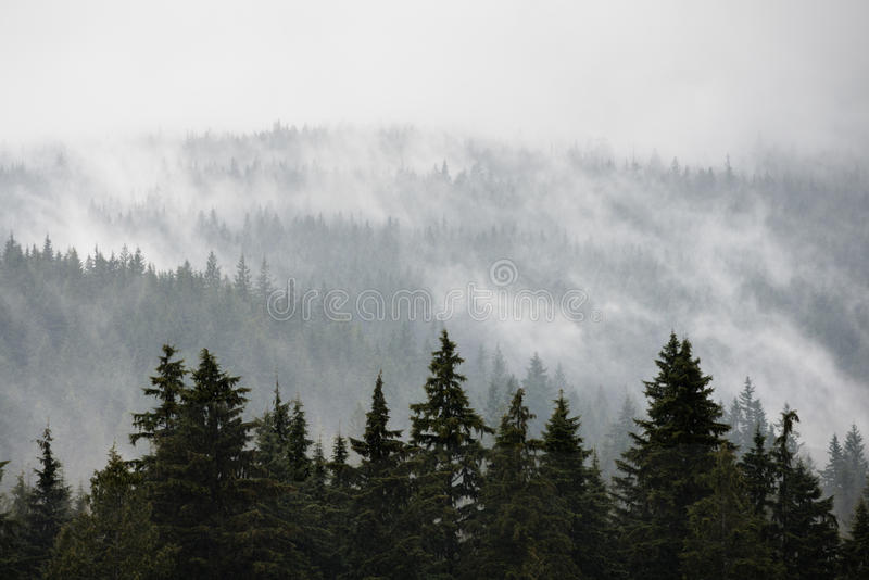 North Vancouver Misty Trees royalty free stock photos