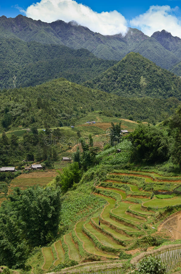 North Vietnam Landscape. Green mountains and rice fields near Sapa, Vietnam royalty free stock images