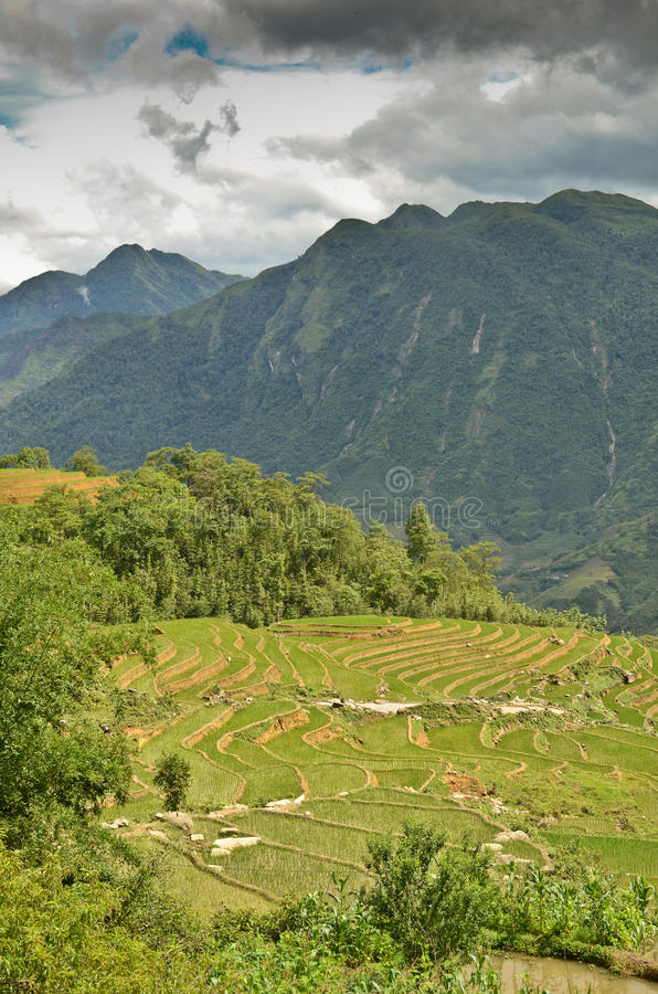 North Vietnam Landscape. Green mountains and rice fields near Sapa, Vietnam royalty free stock photography