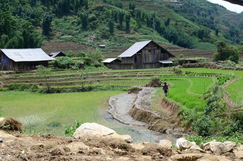 North Vietnam Landscape. Green mountains and rice fields near Sapa, Vietnam stock photos