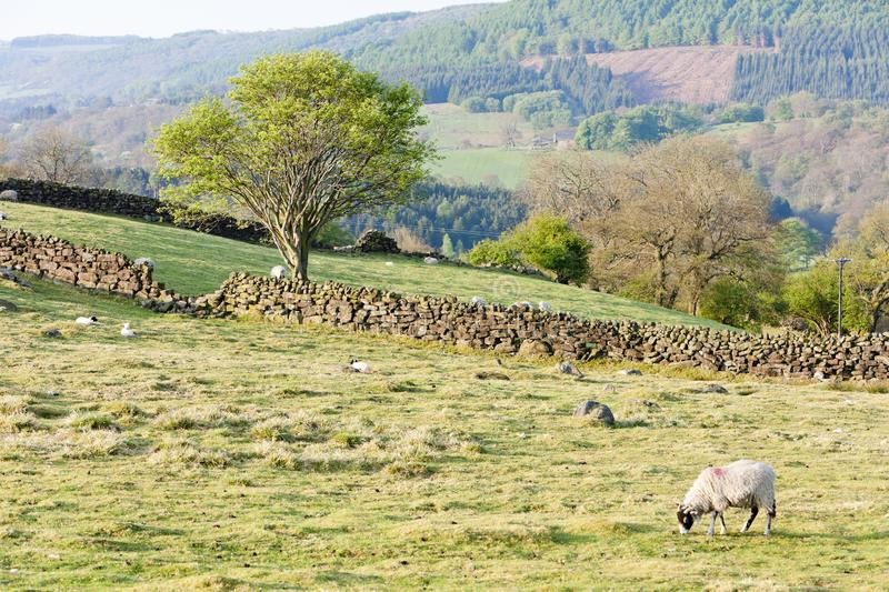 North York Moors National Park, North Yorkshire, England stock images