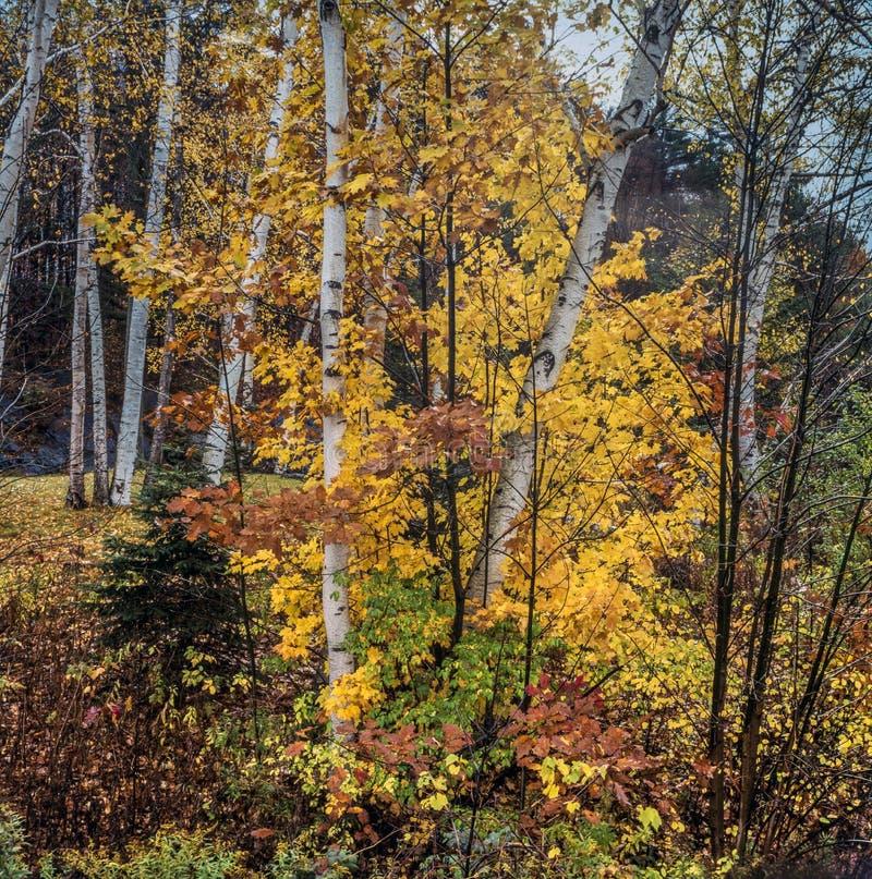 Northeatbos in de Herfst stock fotografie