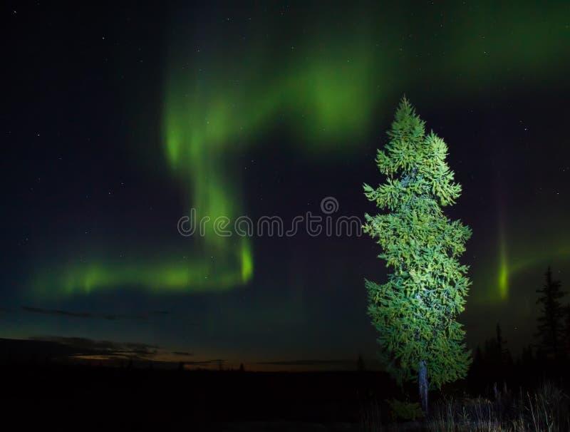 Norther zaświeca (zorza Borealis) zdjęcia royalty free