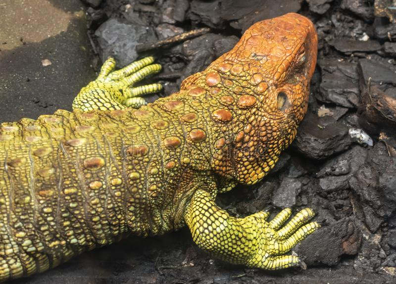 Reptilia Stock Images - Download 5,654 Royalty Free Photos