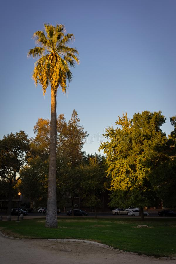 Yellow and orange sunset on a palm tree. Northern California sunset on a palm tree with bright blue skies royalty free stock photos