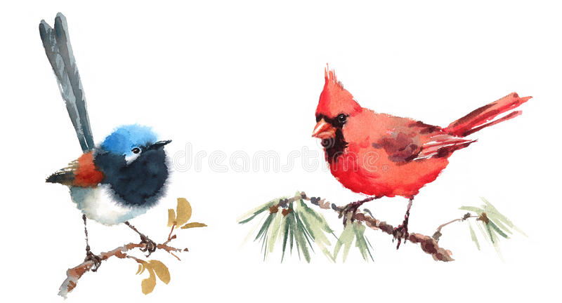 Northern Cardinal and Fairy Wren Birds Watercolor Illustration Set Hand Drawn. Hand drawn Watercolor illustration Set of Northern Cardinal and Fairy Wren Birds royalty free illustration