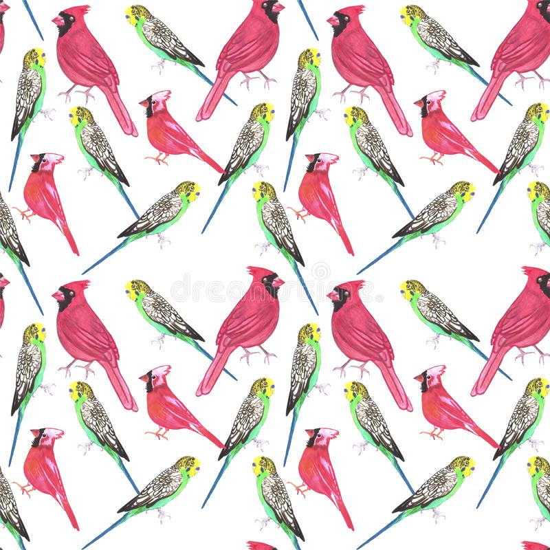 Northern cardinal male and budgies bird seamless watercolor birds painting background.  stock illustration