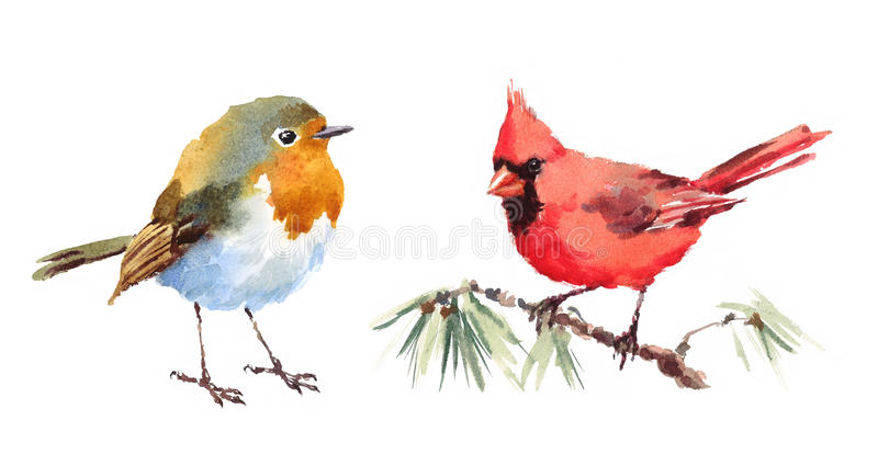 Northern Cardinal and Robin Birds Watercolor Illustration Set Hand Drawn. Hand drawn Watercolor illustration Set of Northern Cardinal and Robin Birds isolated on stock illustration