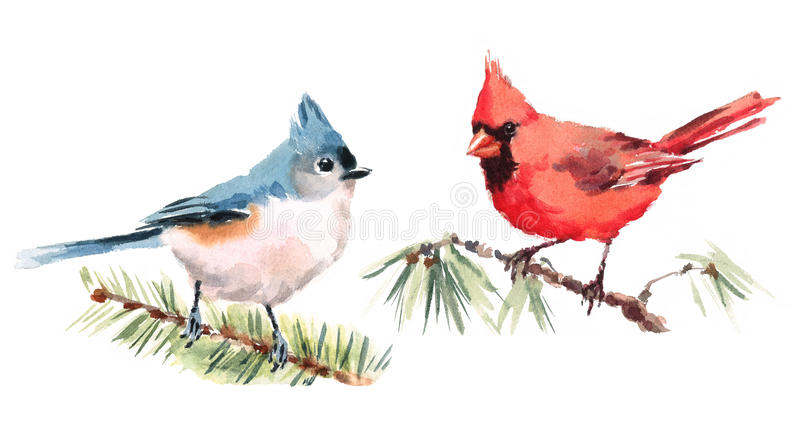 Northern Cardinal and Titmouse Birds Watercolor Illustration Set Hand Drawn. Hand drawn Watercolor illustration Set of Northern Cardinal and Titmouse Birds stock illustration