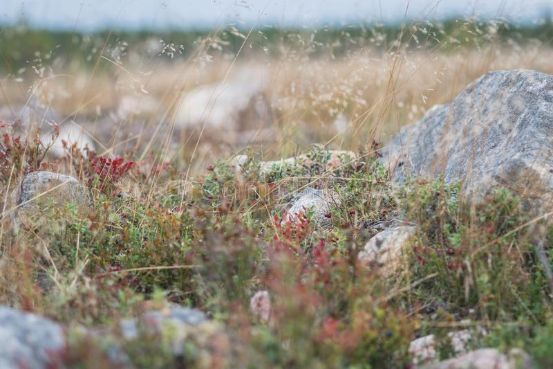 Northern flora closeup. Closeup of wild plants  on meadow, background, fauna, floral, natural, nature, soil, vegetation, wildflowers, wildplants stock photo