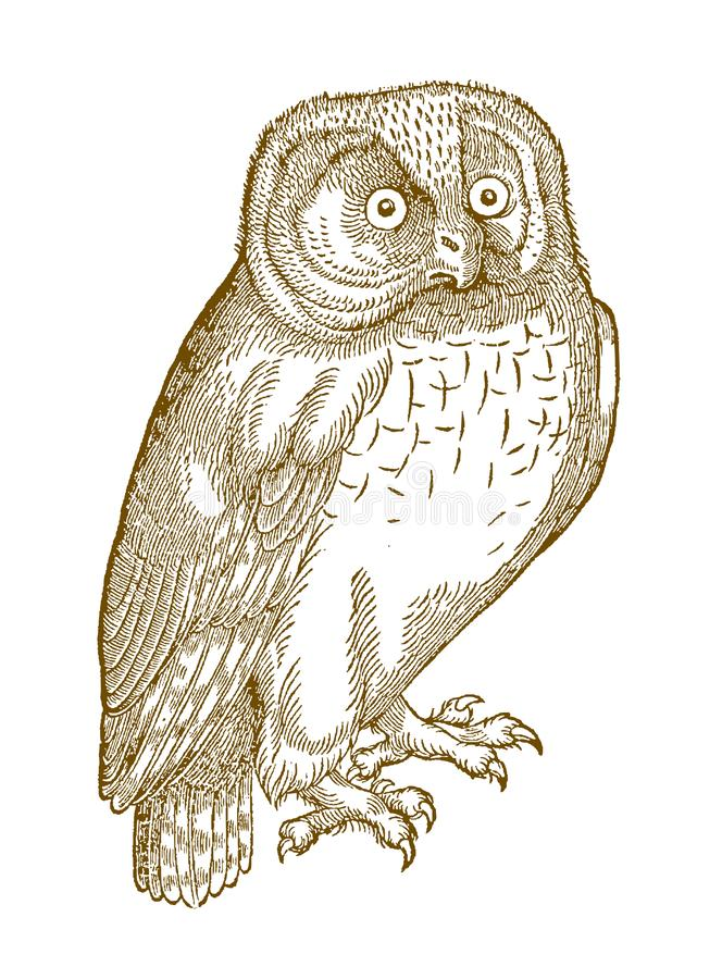 Northern hawk-owl surnia ulula in quarter front view. Illustration after a historic woodcut from the 16th century royalty free illustration