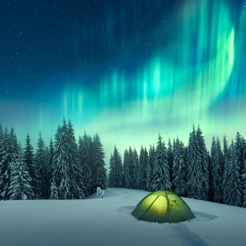 Northern lights in winter forest royalty free stock photography